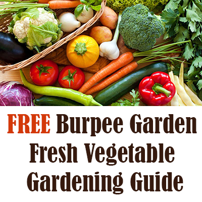 FREE Burpee Garden Fresh Vegetable Gardening Guide